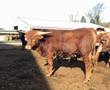 CATCHIT,X CW BEAUTY BULL