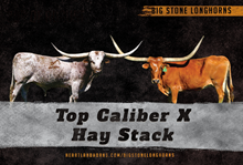 Top Caliber x Hay Stack
